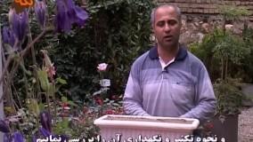 تکثیر گل محمدی (رز)
