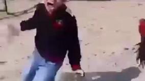 گزارشی خنده دار از دعوای خروس و پسربچه
