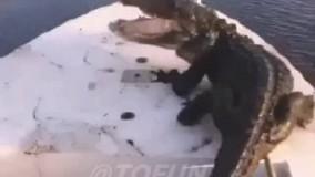 تمساح دو متری مهمان ناخوانده در قایق