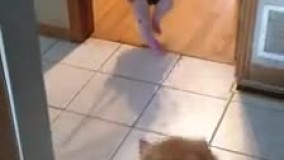 بازی کردن سگ با نوزاد و بالاپایین پریدن جفتشون