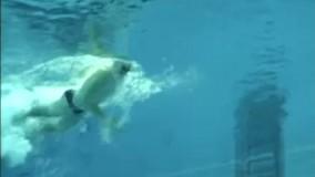 آموزش شنا از مقدماتی تا پیشرفته - آموزش تکنیک های شنا