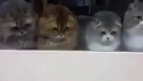 ارتش گربه ها