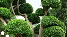 زیبا ترین درختان در طبیعت