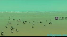 موزیک ویدیو جدید احمد سعیدی به نام چند وقته