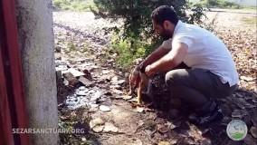 آسیب های وحشتناک بستن سگ با طناب 360