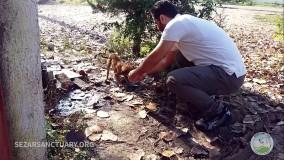 آسیب های وحشتناک بستن سگ با طناب-هشدار ! ویدیو دارای تصویر های دلخراش است
