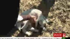 گزارش پخش شده از آلایندگی کارخانه ذوب مس خاتون آباد در شبکه خبر