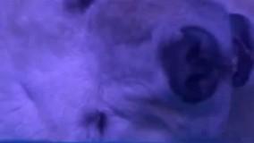 غمگین ترین خرس قطبی دنیا