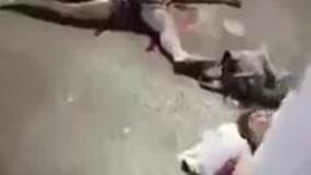 تعداد کشته های حمله کامیون در نیس در حال افزایش است. (دارای صحنه های دلخراش)