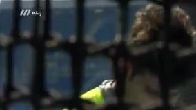 حذف پژمان قلعه نویی در مرحله مقدماتی پرتاب چکش (المپیک ریو 2016)