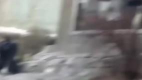 حمله گوریل به انسان از فاصله چند قدمی