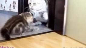 گربه مردم معتاد شد رفتتتتتتت
