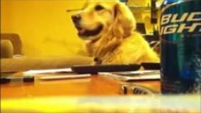 سگه براش آهنگ میزنن میخنده و لبخنده میزنه خیلی جالبه