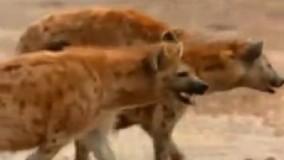 مجموعه مستندهای کشنده ترین حیوانات جهان