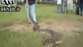 فیلم / دختر هندی مار غول پیکر را اسیر کرد!