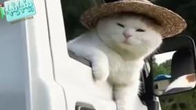 گربه های بامزه را ببینید