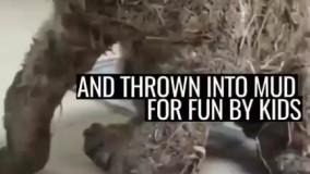 سگی که توسط بچهها محض خنده و سرگرمی توی چسب و بعد گل و لای انداخته شده بود