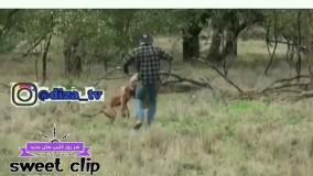 کانگورو شرور رفت بچه محلاشو بیاره!!!