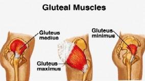 نکاتی درباره فرم دهی و افزایش حجم عضلات باسن