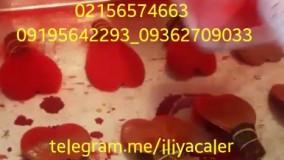 فروش دستگاه مخمل پاش و فلوک 09362709033
