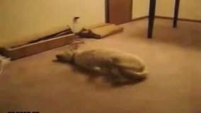 خواب دیدن یک سگ