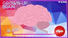 مراقبت از مغز
