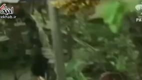 فیلم/ تصاویری از بازداشت صدام حسین در ۲۳ آذر ۸۲