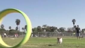 اسباب بازی شگفت انگیز برای حیوانات خانگی