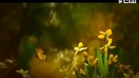 نماهنگ زیبای عطر صلوات