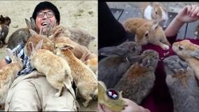 جزیره خرگوش ها در ژاپن