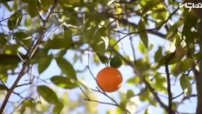 خواص و فواید شگفت انگیز پرتقال