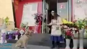 قطعا سگ باوفاترین حیوان دنیاست