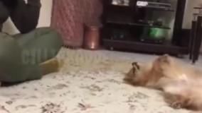 باحالترین سگ ایرانی