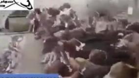 صحنه عجیب و حیرت انگیز غذا دادن به صدها سگ گرسنه!