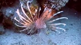 ماهی زیبا