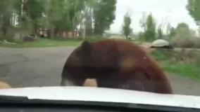 دیدنیها حمله کردن حیوانات وحشی به آدمها