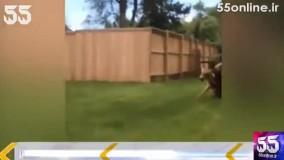 حمله مرگبار خرس به گوزن در حیاط یک خانه