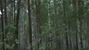 نجات یک کودک 4 ساله روس بعد از 4 روز گمشدن در جنگل