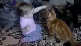 گربه ها رو سرکار گذاشته