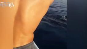بازی با نهنگ در آب های ساحل بوشهر