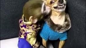 رفاقت و نوازش سگ و میمون