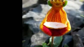 عجیبترین و زیباترین گل های جهان