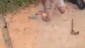 گذاشتن تله برای مار