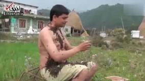 فیلم/ دوستی عجیب مرد نپالی با هزاران زنبور!