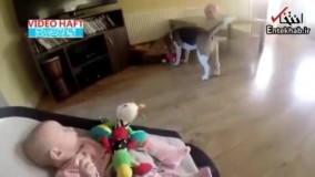فیلم/ تلاش سگ برای به دست آوردن دل نوزاد!