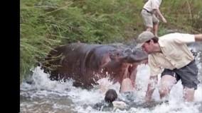 حمله حیوانات وحشی به انسان ها!