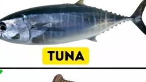 هرگز این ماهی ها رو نخورید!