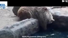 کمک رسانی حیوانات برای نجات یکدیگر