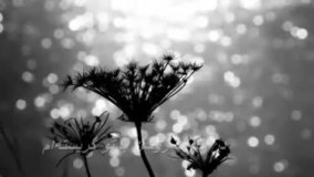 دانلود شعر عاشقانه اشک رازیست از احمد شاملو