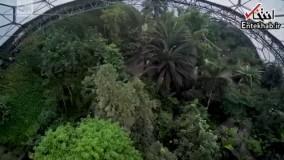 فیلم/ وقتی تکنولوژی جنگل را به قلب شهر می آورد!